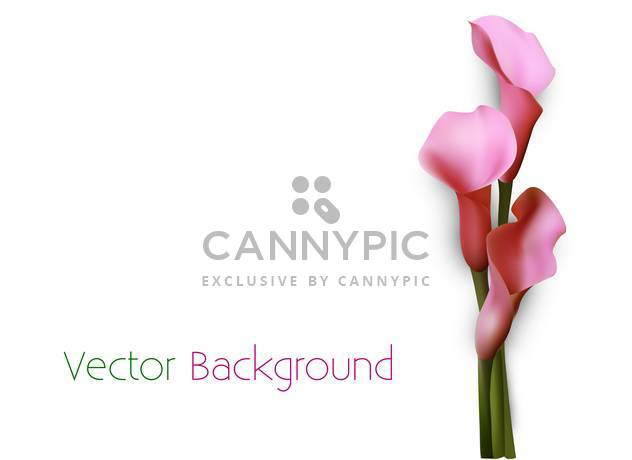 vector background with pink calla flowers - Free vector #134841
