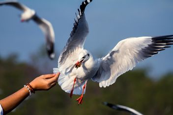 Girl's hand feeding seagull - бесплатный image #136361