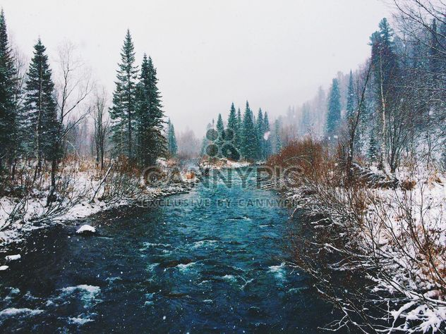 Creek in winter forest - Free image #136371