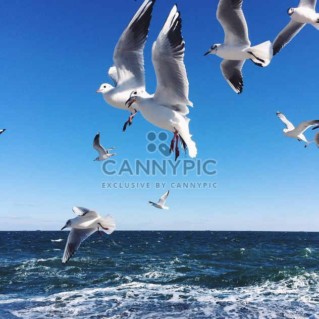 Flying seagulls - Free image #136411