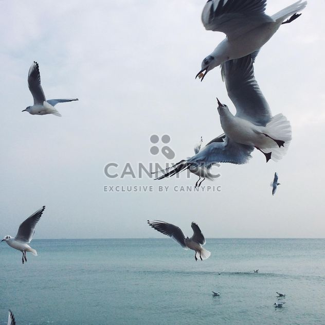 Seagulls fighting for food - Free image #136481