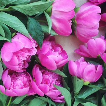 Beautiful pink peonies - image #136561 gratis
