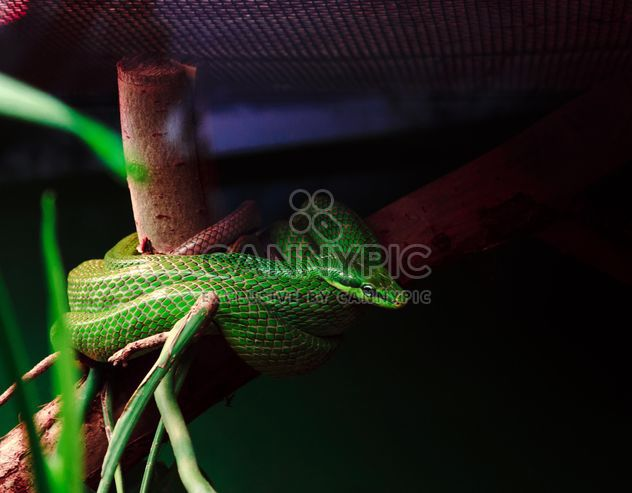Green snake curled on a branch - Free image #136631