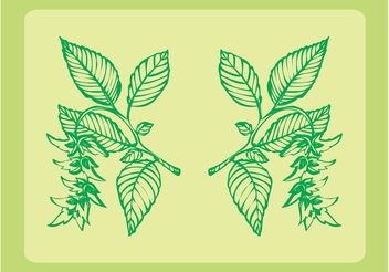 Fresh Plants Ornaments - Kostenloses vector #143311