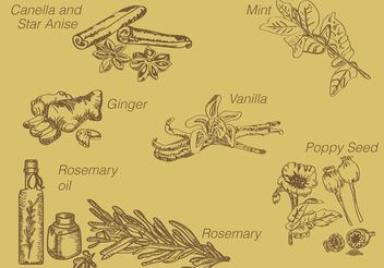 Hand Drawn Spices - vector gratuit #145571