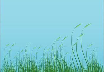 Grass Graphics - vector gratuit #145641