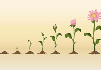 Growing Flower Vectors - Free vector #145951