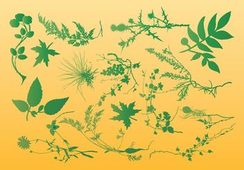 Plants Vector Graphics - vector gratuit #146271