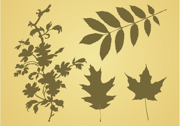Leaves Vector Graphics - vector gratuit #146411