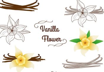 Vanilla Flower Vectors Set - Free vector #146701