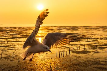 Seagull flying in twillight sky - image #147921 gratis
