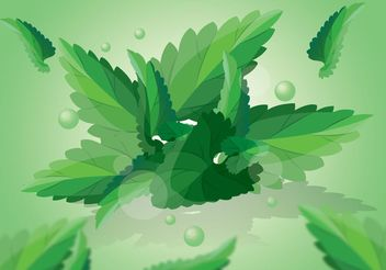 Green Mint Leaves Vector - vector gratuit #152881