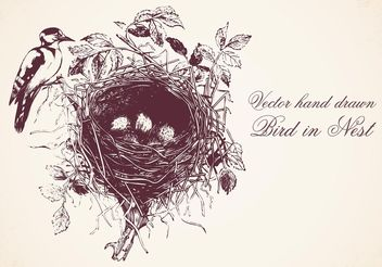 Free Hand Drawn Bird In Nest Vector - бесплатный vector #156571