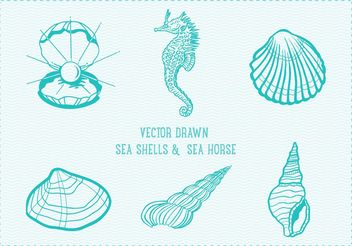 Free Vector Drawn Sea Shells - бесплатный vector #156711