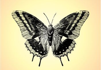 Retro Butterfly Drawing - Free vector #156741