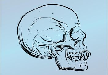 Skull Drawing - vector gratuit #157511