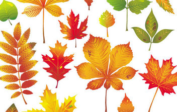 Autumn Leaves Vector 1 - Free vector #175471