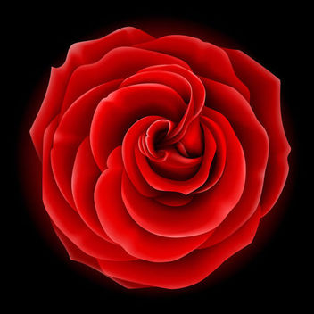 Realistic Full Blossom Red Rose - vector gratuit #179551