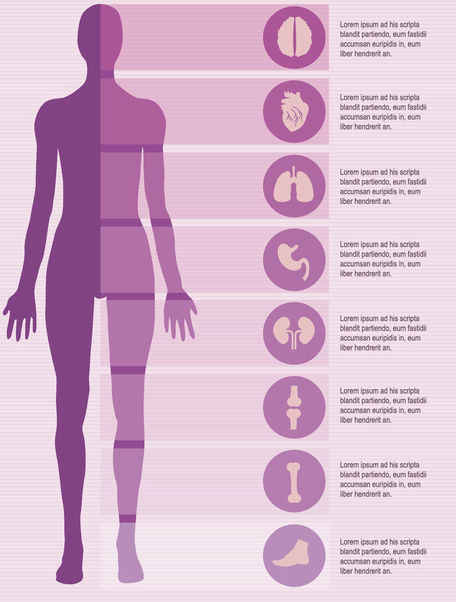 Female body infographics elements - vector gratuit #179851