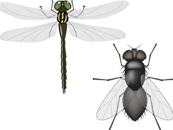 Flying Insects - Free vector #181301