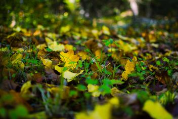 Fallen autumn leaves on green grass - image #182771 gratis