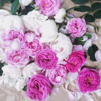 Pink and white peony flowers - image #183191 gratis