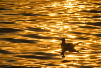 Golden sunset on a sea - image #183501 gratis