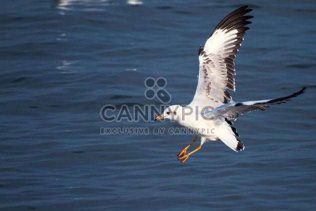 Flying seagull - image gratuit #183541