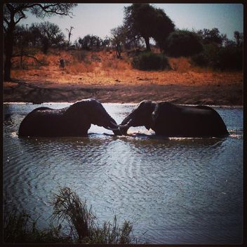 Two African elephants - image gratuit #183591