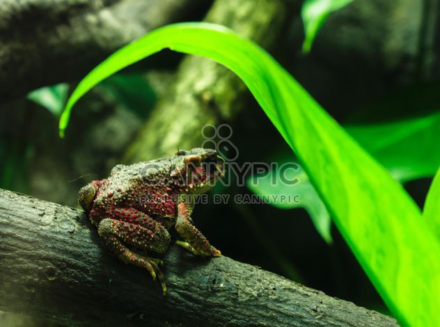 Green frog on beam - image gratuit #183791