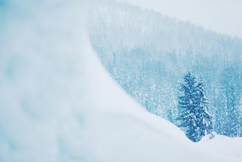 Winter landscape with trees in snow - image #184001 gratis