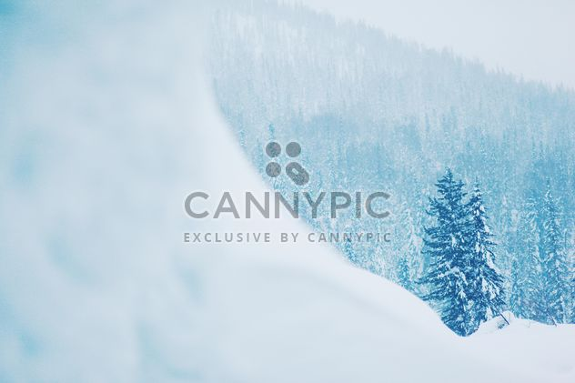 Winter landscape with trees in snow - Free image #184001