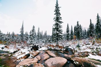 Snowy forest, Taiga - image gratuit #184041