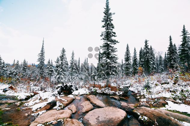 Snowy forest, Taiga - image #184041 gratis
