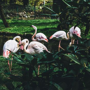 Five pink flamingos - Free image #184571