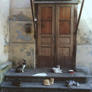 Five cats in front of the door - Free image #184591
