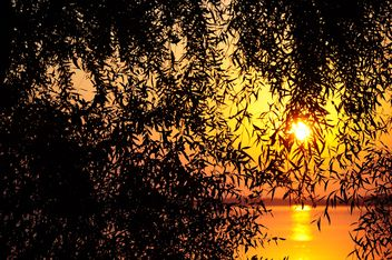 tree against sunset - image gratuit #185711