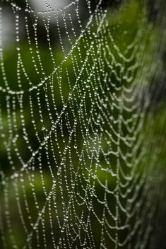 Cobweb with water drops - бесплатный image #186131