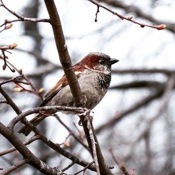 Close-up of sparrow on branch - бесплатный image #186211