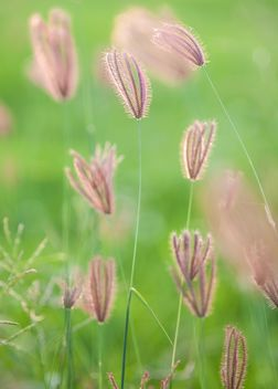 Close-up of spikelets on green background - image gratuit #186311