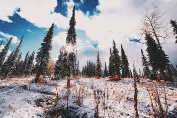 Amazing winter landscape - Free image #186601