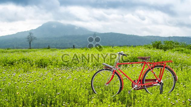 Red bicycle on a green meadow - Free image #186931