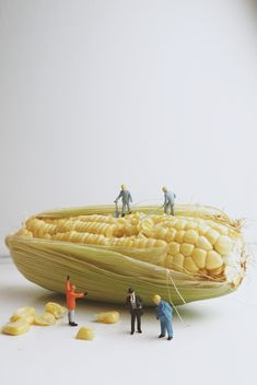 Miniature people working with corn - бесплатный image #187131
