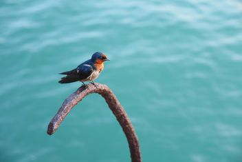 Small bird on the beach - image #187151 gratis
