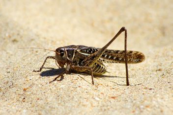 Close-up of locust on sand - image #187761 gratis