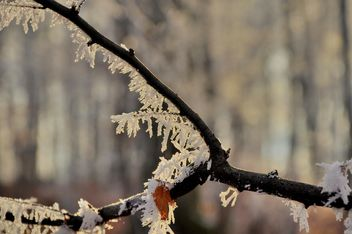 Tree branch with hoar frost - бесплатный image #198151