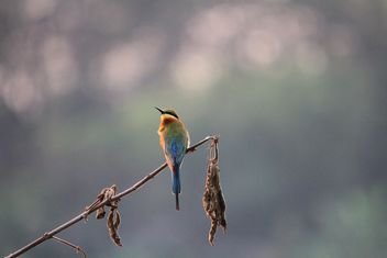colorful bird on a branch - image #199011 gratis