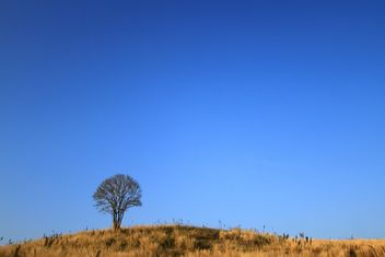 Tree on hill under blue sky - image #199031 gratis