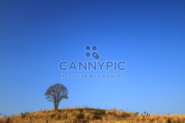 Tree on hill under blue sky - Free image #199031