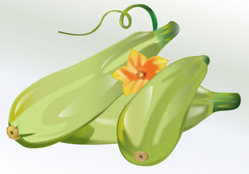 Vegetable Zucchini Vector - vector #199091 gratis